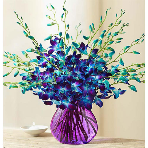 Blue Sonia Orchids